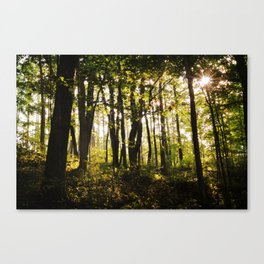 Woodland Sunstar Canvas Print