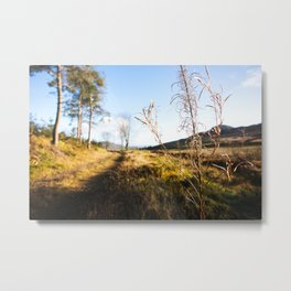 Sunny Path in Cooley Mountains Metal Print