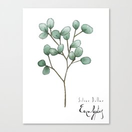 Silver Dollar Eucalyptus Canvas Print