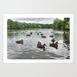 Ducks on the Lake Art Print