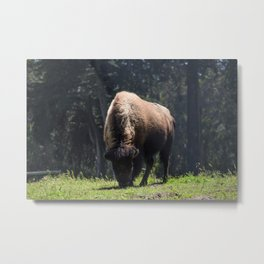 Majesty of the West (Bison) Metal Print
