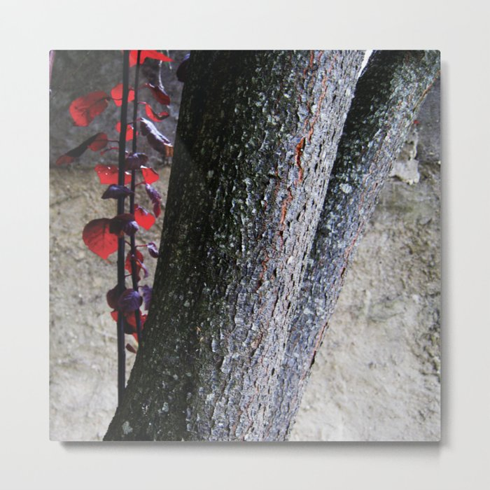 Urban tree with red leaves Metal Print