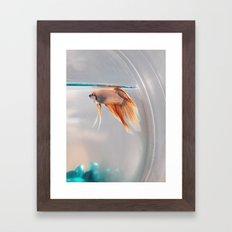 Fish in a fishbowl Framed Art Print
