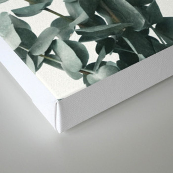 Eucalyptus Leaves Canvas Print