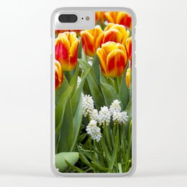 Red and Yellow Stripes Tulips with White Blossoms underneath in Amsterdam, Netherlands Clear iPhone Case