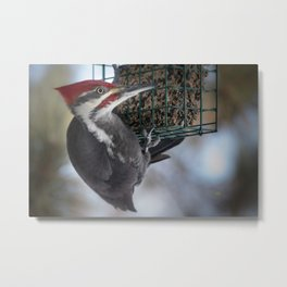 December Pileated and Suet Feeder Metal Print