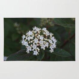 Viburnum tinus flowers and buds Rug