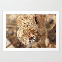 Rabbit Whiskers Art Print