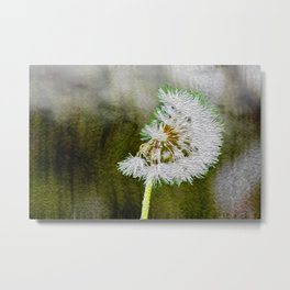 Floral : The summer daisy Metal Print