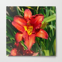 Deep Orange Tiger Lily Metal Print