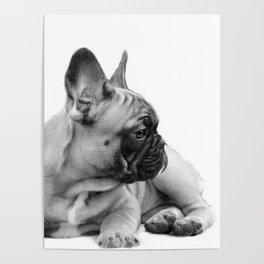 FrenchBulldog Puppy Poster