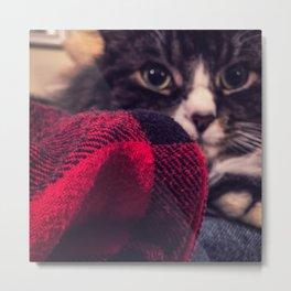 Abelard the Maine Coon Cat Metal Print