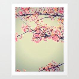 cherry blossom pop Art Print