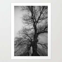 Nature Photography Weeping Willow | Lungs of the Earth | Black and White Art Print