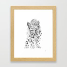 On the Prowl :: A Young Bobcat Framed Art Print