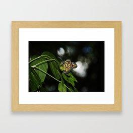 monarch. Framed Art Print
