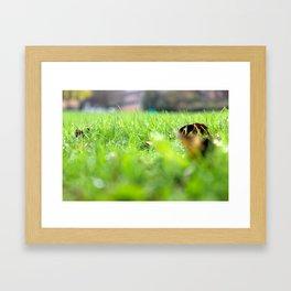 Ant's View: Grass Framed Art Print