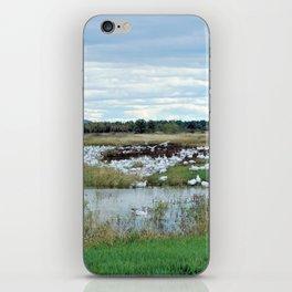 1001 Snow Geese iPhone Skin