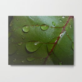 leaf  with drops of water Metal Print