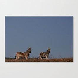 Wild Zebras Canvas Print