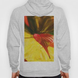 Autumn colors Hoody