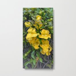 Cat's Claw Vines Metal Print