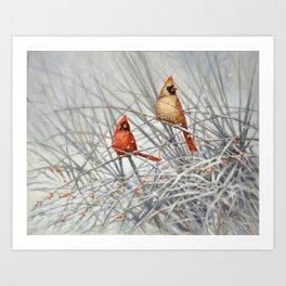 Cardinal Couple in Winter Art Print