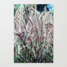 Fuzzy Grass Canvas Print