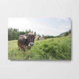 Sugar House Cow Metal Print