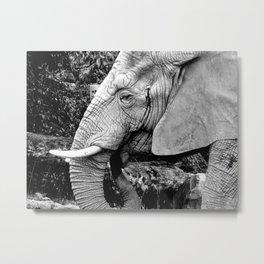 Large Beauty Metal Print