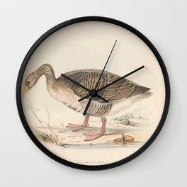 Grey-lag Wild Goose, anser palustris5 Wall Clock