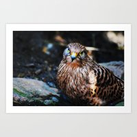 falcon Art Prints featuring Falcon by Amee Cherie Piek