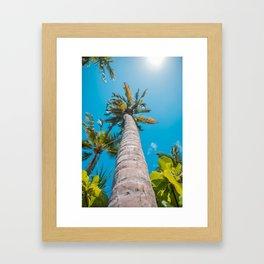 Tall Tropical Palm Trees Framed Art Print