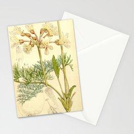 Flower 5421 pelargonium bowkeri Mr Bowker s Pelargonium1 Stationery Cards