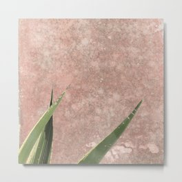 Cactus on Weathered pink wall Metal Print
