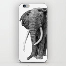 Bull elephant - Drawing in pencil iPhone Skin