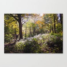 Montreal Autumn Canvas Print