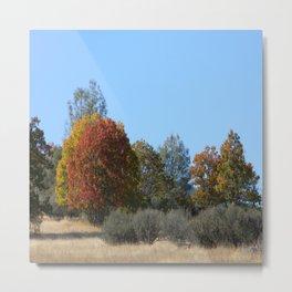 Beautiful Fall colours in Hayfork, California... Metal Print