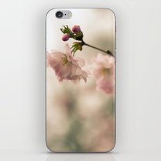 Cherry Blossoms Bloom in Spring iPhone & iPod Skin