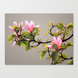 Magnolia Branch Canvas Print