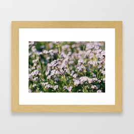Forget-Me-Nots Framed Art Print