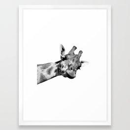 Black and white giraffe Framed Art Print