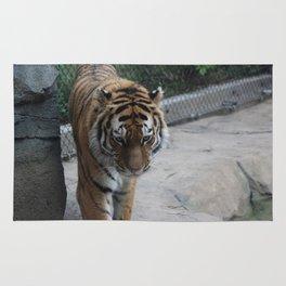 Tigress Rug