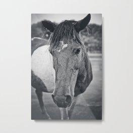 wild horse, assateague Metal Print