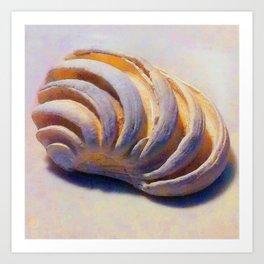 Imperial Venus Sea Shell Art Print