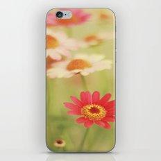 Daisy Love iPhone & iPod Skin