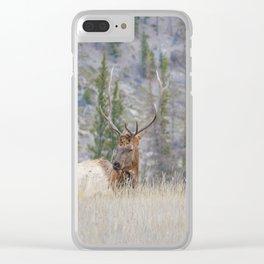 Elk shedding their antlers in Jasper National Park Clear iPhone Case