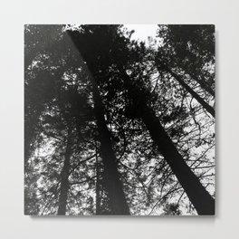 Black & White Forest Metal Print