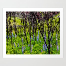 Blooms in Burnt Out Trees Art Print