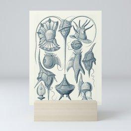 Ernst Haeckel Peridinea Plankton Mini Art Print